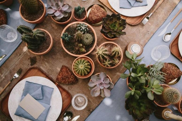 cactus-plantjes-tafel-plantenverhuur-plantscapes
