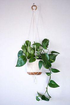 hangplant-blog-plantenbakken-en-potten-plantenverhuur