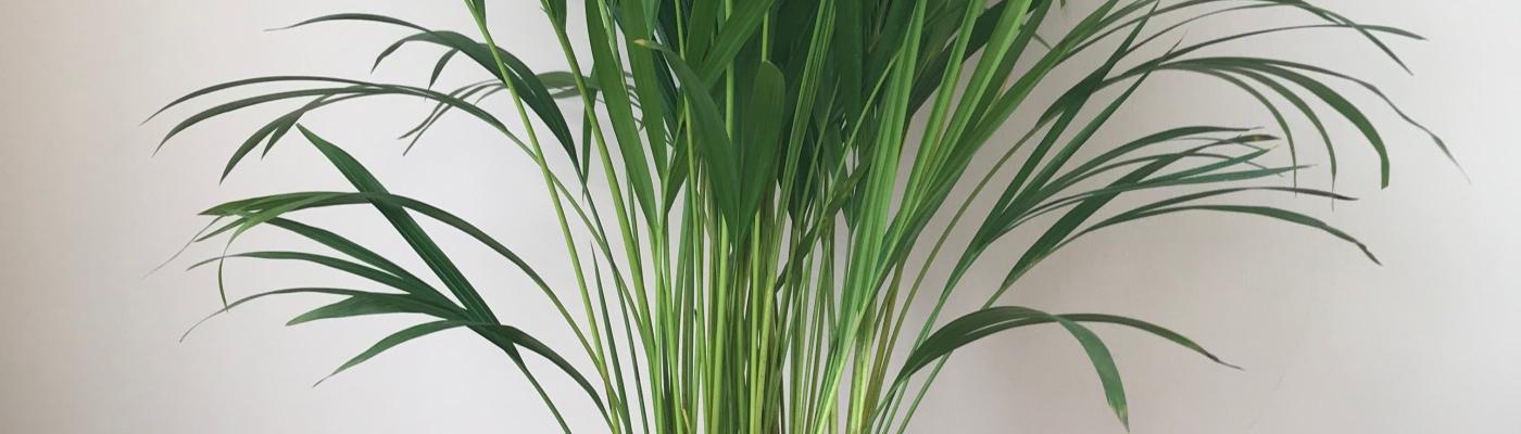 hedera_kantoor_plantscapes_planteninrichting