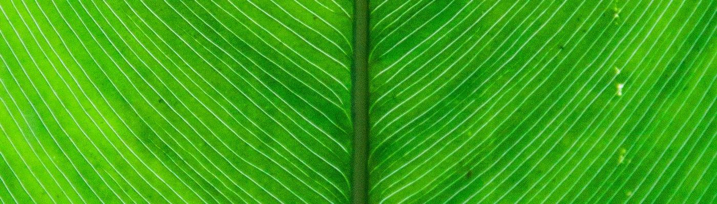 kamerplant-kantoorbeplanting-inrichting-groteplanten