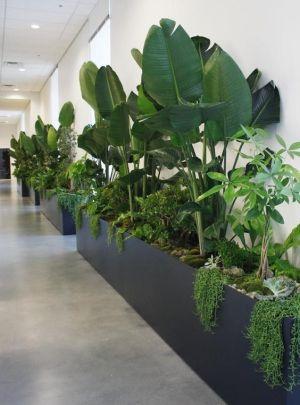 kantoor-event-plantscapes-potten-planten-interieurbeplanting-plantenbakken