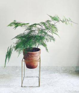 plantenhangers-hangplanten-potten-plantenbakken-plantscapes-interieurbeplanting