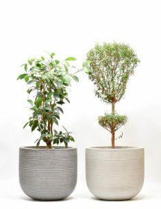 plantenhangers-potten-hangplanten-potten-plantenbakken-plantscapes-interieurbeplanting