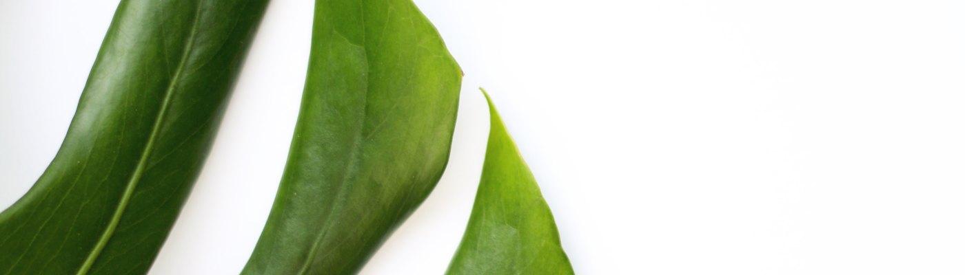 plantenopkantoor-kantoorplanten-plantenbak-beleving