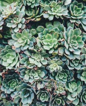 succulents-vetplanten-plantenverhuur-de-beste-kantoorplanten