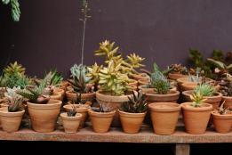 terra-cotta-plantenpotten-plantenbak-trouwerij-huwelijk-styling-plantscapes-plantenverhuur