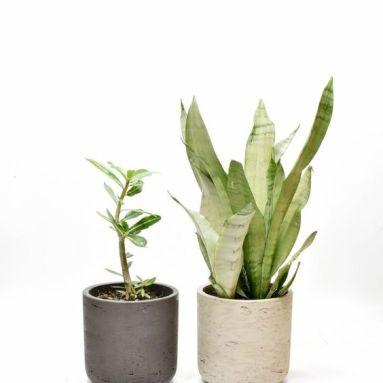 trouwerij-keramiek-kunststof-metalen-plantenbakken-plantenverhuur-plantscapes-interieurbeplanting-event-styling-